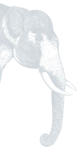 Soundportraits - Audio Samples - Elephant